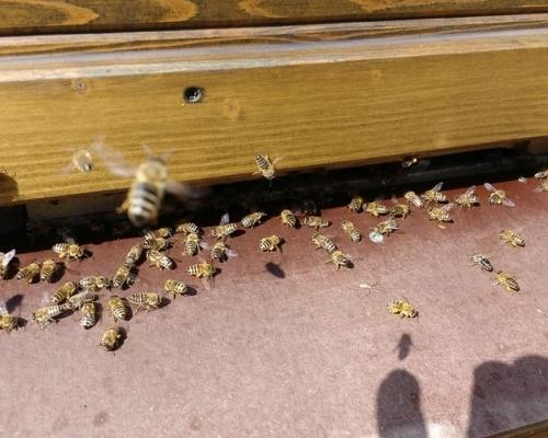 außergewöhnliche Unterkünfte - Bienenwagen